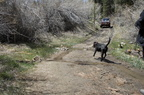 Trail Maintenance - 18