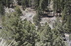 Trail Maintenance - 46