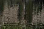 Swamp Lake 2012 - 151
