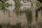 Swamp Lake 2012 - 227